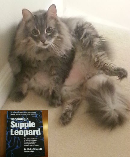 the-supple-leopard